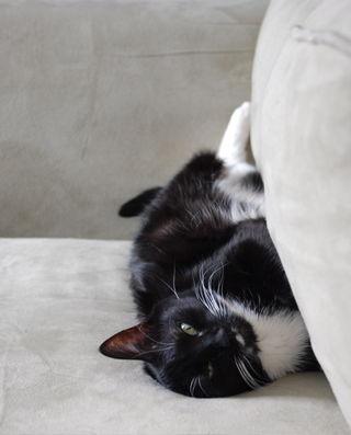 Sleepy kitty 2