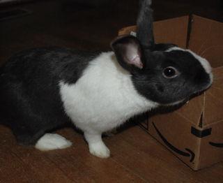 Basil marks a box