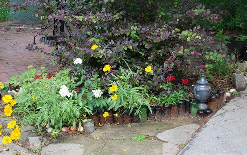 Bottle garden in bloom